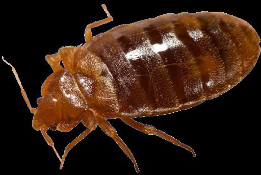 Bug Removal Leeds