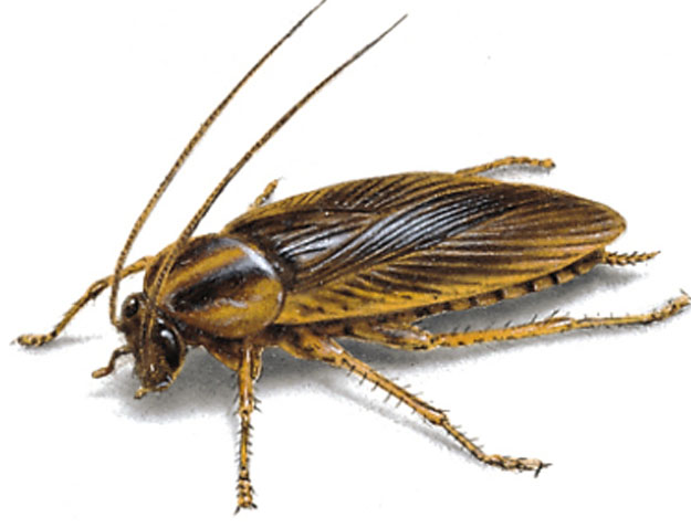 Cockroach Removal Leeds