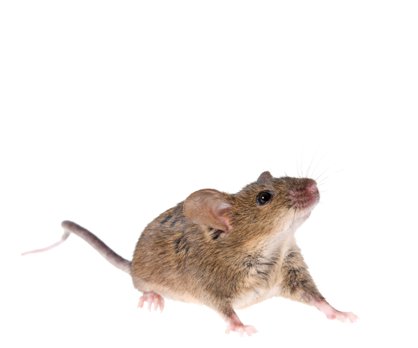 Rodent & Rat Removal West Yorkshire
