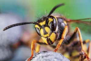 Wasp Season in the UK