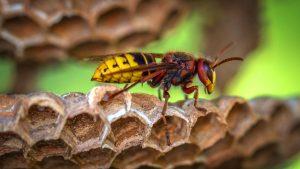 Wasp Seasons
